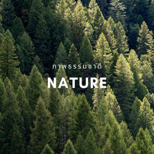 nature รูปภาพแต่งบ้านติดผนัง PENNELLO